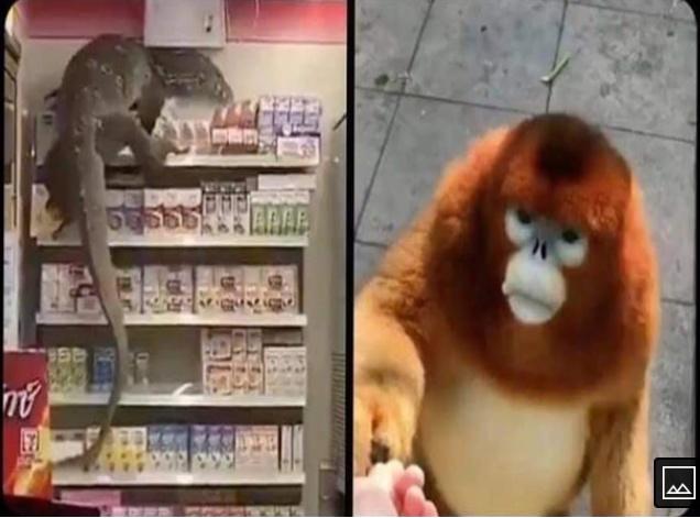 godzilla vs king kong versão estendida - meme