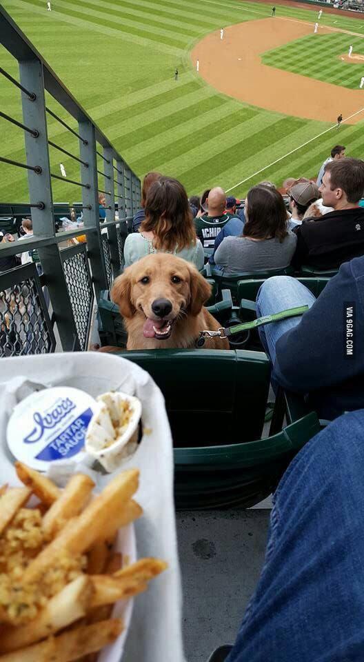 Baseball Pupper........ Sorry for 9gug - meme