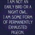 Never get enough sleep