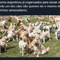 A Argentina será a nova Venezuela