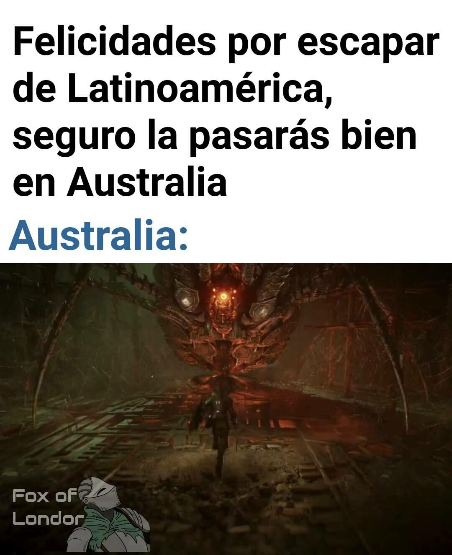 Descubrieron la araña más grande en Australia - meme