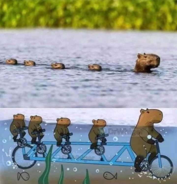 Aquabike - meme