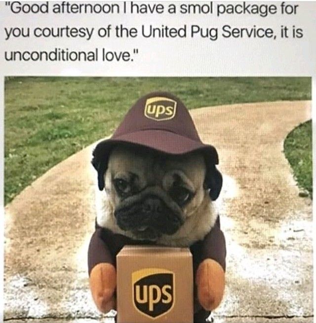 Puggy Love - meme