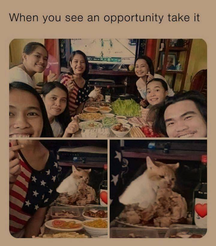 Are your first thoughts wondering if the cat is a cannibal? - meme
