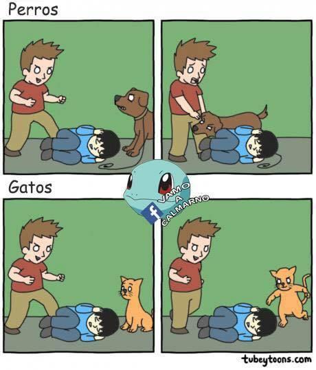 ggg stos gatos son unos lokishoz - meme