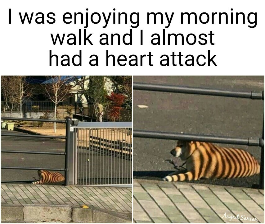 Seriously I thought it was a tiger first - meme