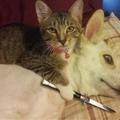 Os gatos ganham