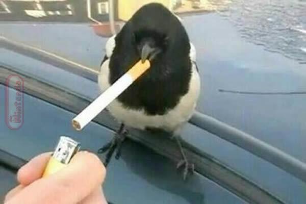 Da cigarro po pai - meme