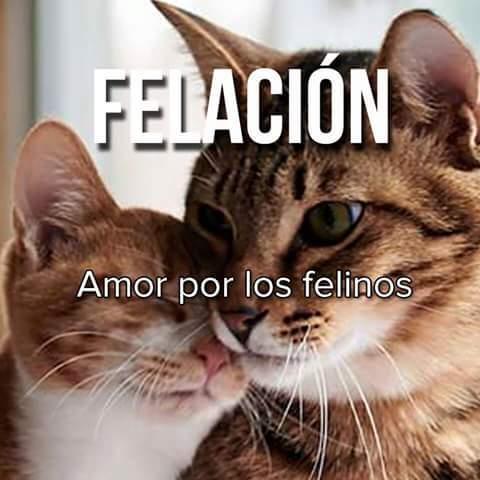 Quién ama a los felinos <^w^> - meme