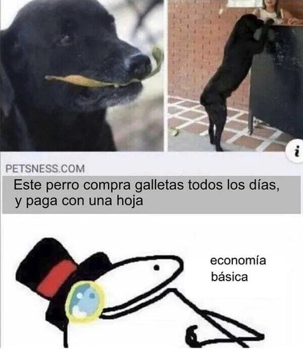 Perro de negocios :sir: - meme