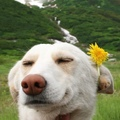 Just Doggo With Dandelion To Brighten Up Your Day.