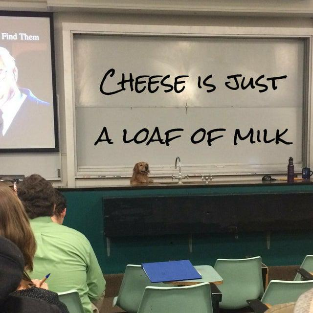 Cheese is just a loaf of milk - meme