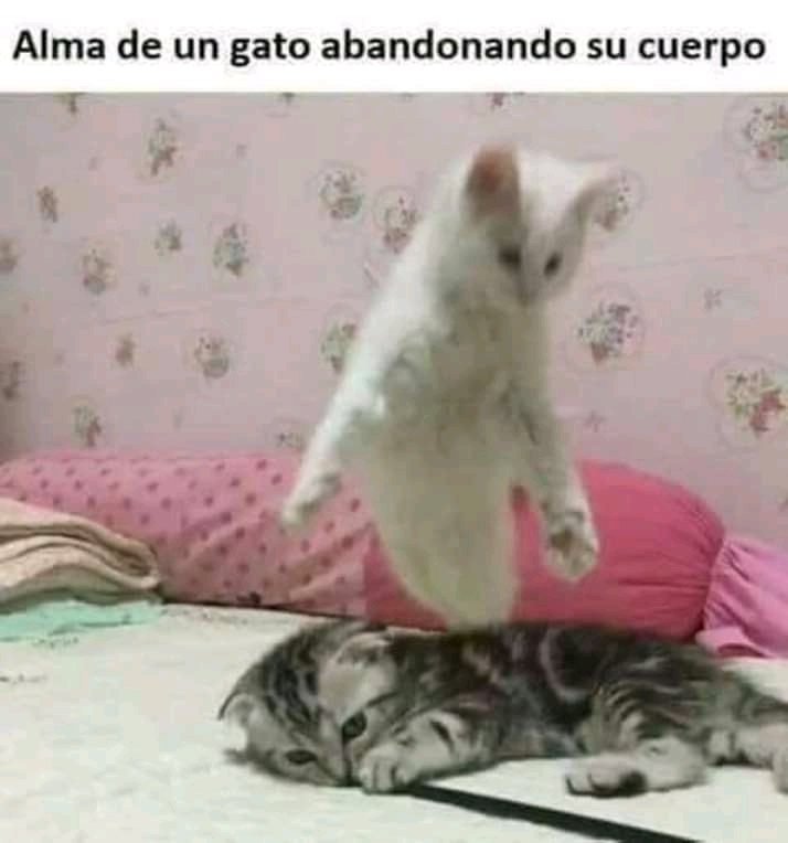 Alma - meme