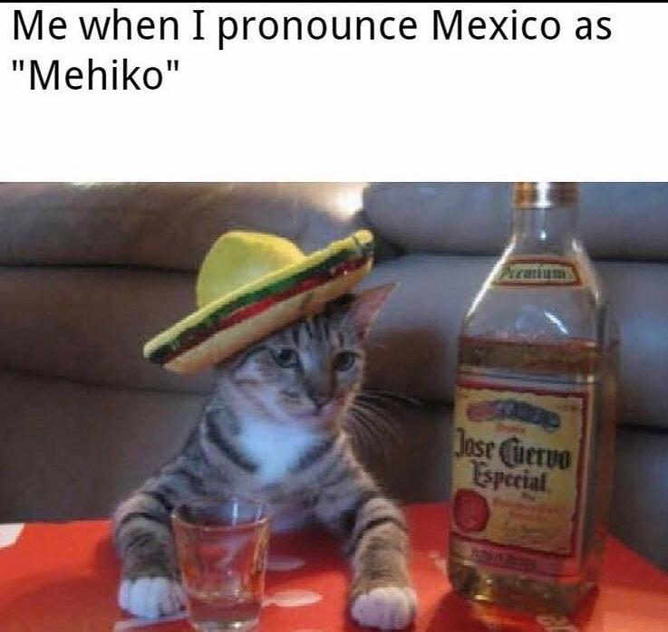 el gato - meme