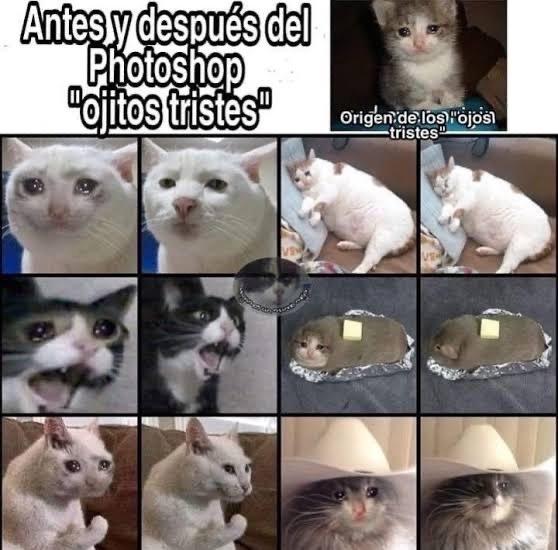 Gatos meow - meme