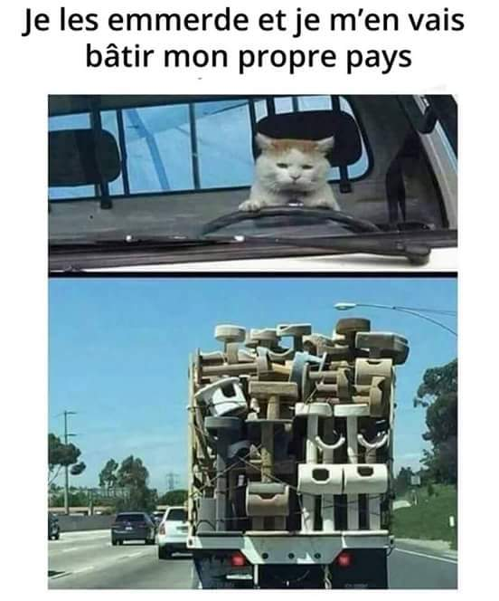 Full arbre à chat - meme