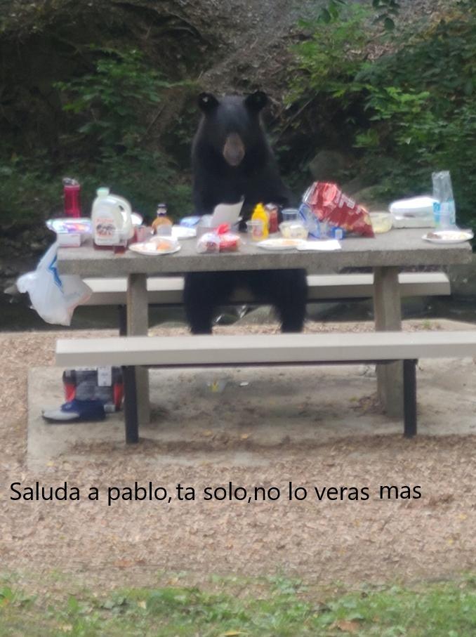 oso sentado,saludalo - meme