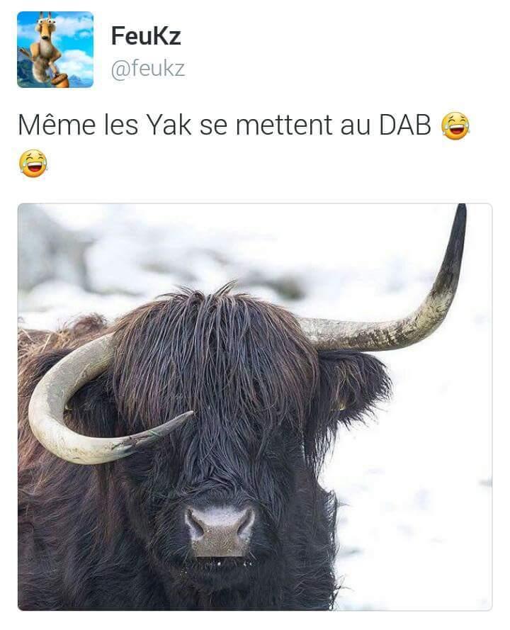 Fuck la symétrie - meme