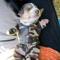 Aww pup