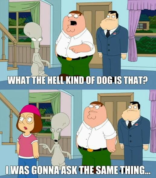 What breed is it? - meme