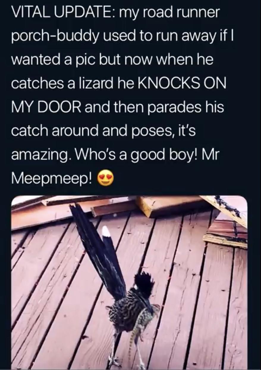 good Meepmeep!!!!!!!! - meme