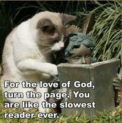 Cat reading book - meme