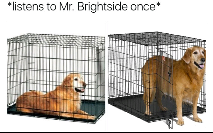 Coming out of my cage - meme