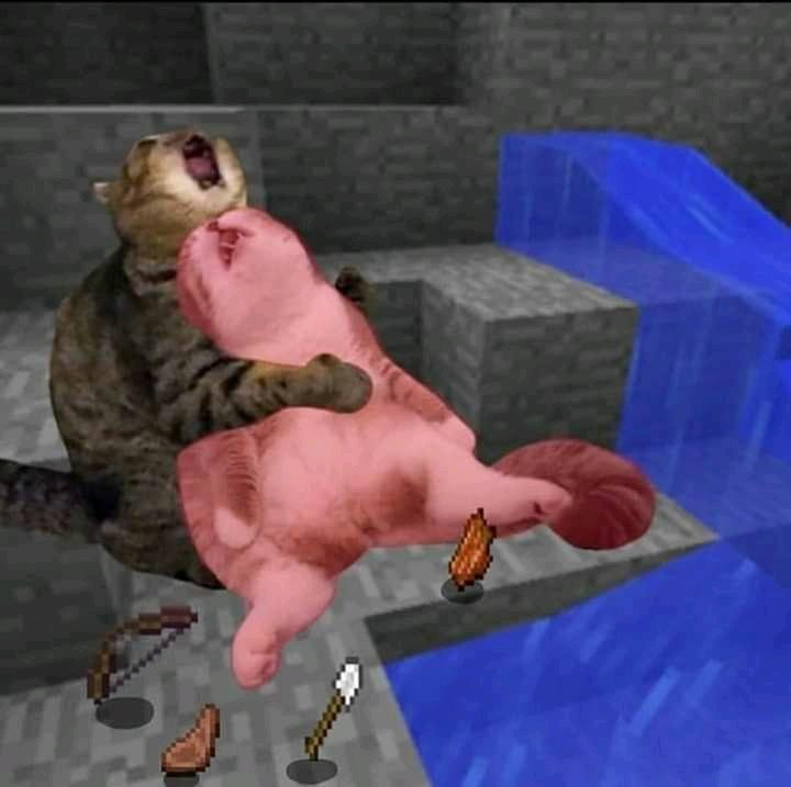 Gatito truste y gatito muerto - meme