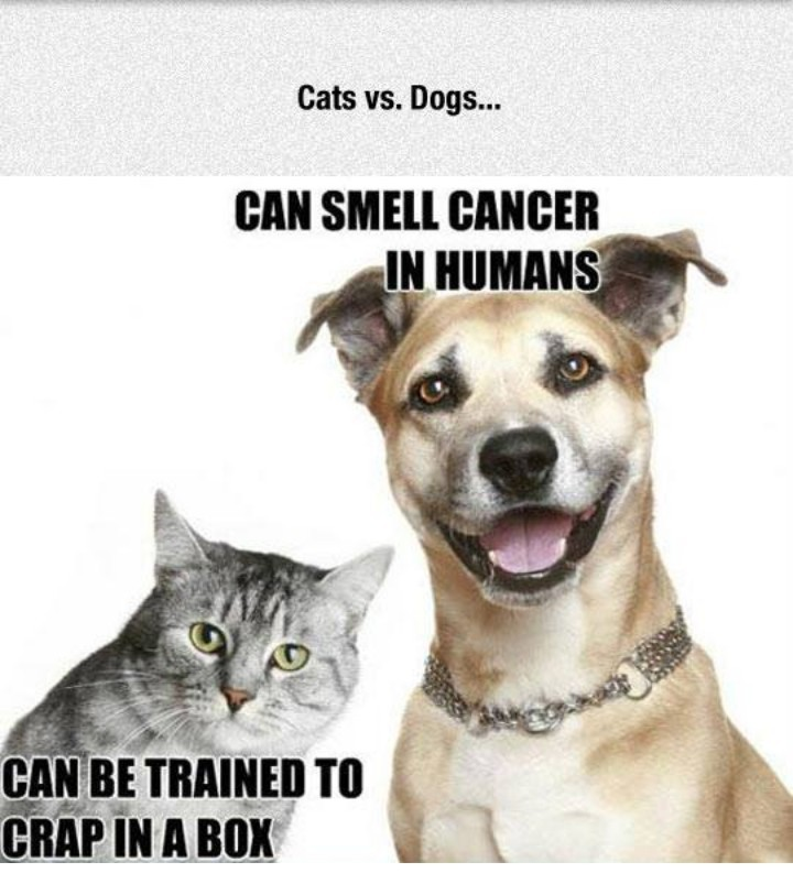 Cats vs dogs , Meme by Samuraistorm666 ) Memedroid
