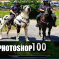 That photoshop thou