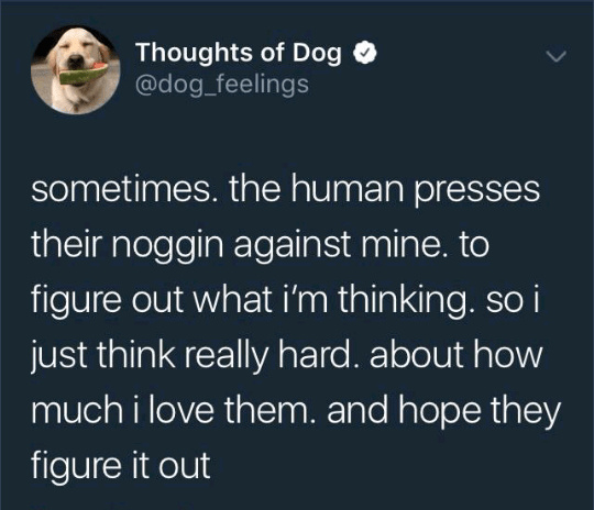 Thoughts of Dog - meme