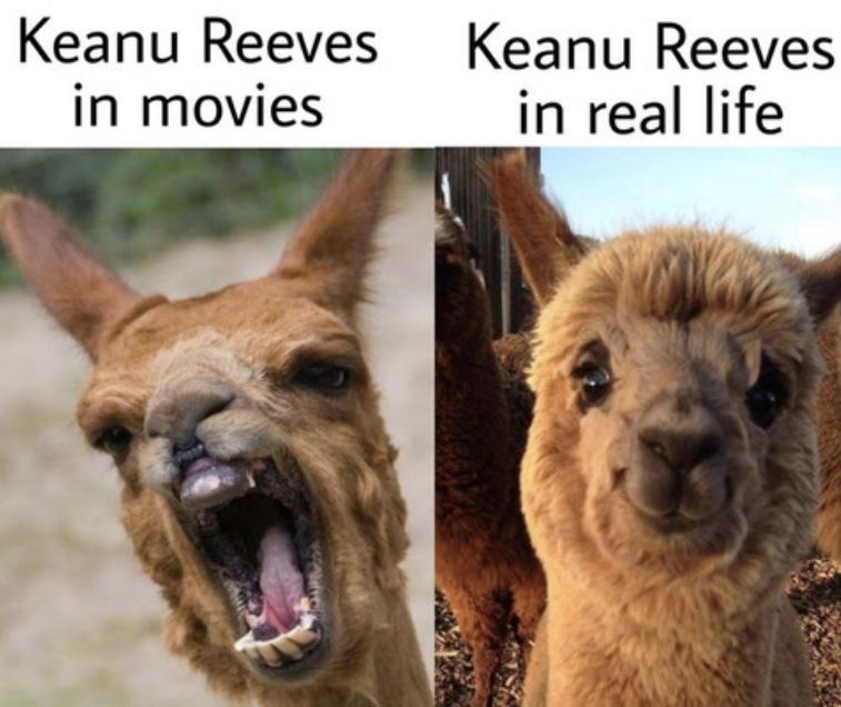 a gentle man - meme