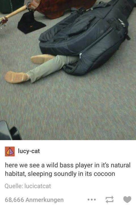 wild bass player - meme