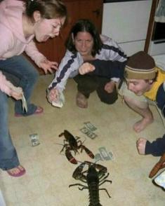 Rinha de lagosta fodase - meme