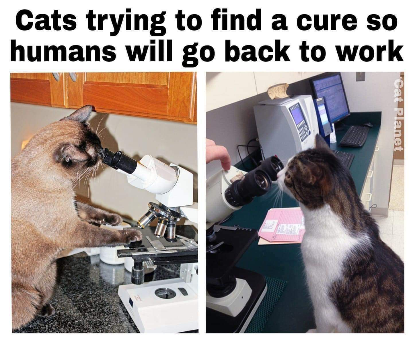<(-.-)> We want our moments of solitary back, hooman! - meme
