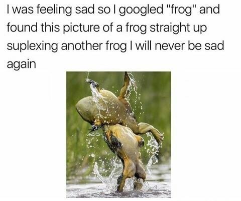 Frogolicious - meme