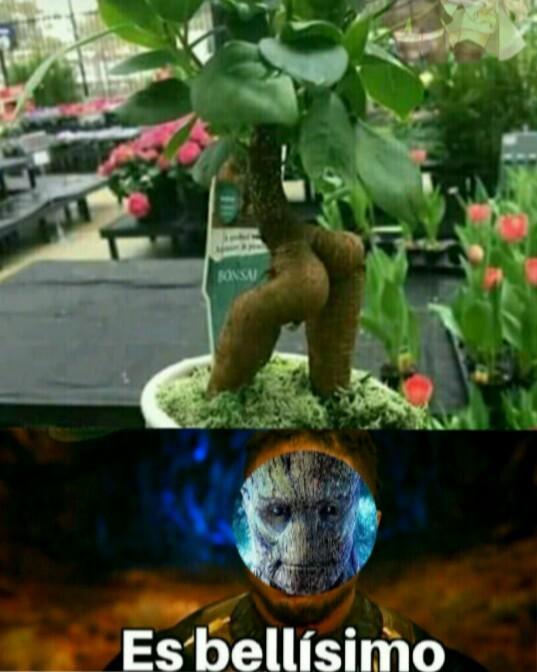 Ese Groot es todo un lokillo - meme