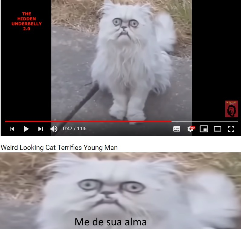 mãe tem um gato estranho aqui fora - meme