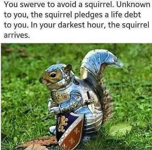 In your darkest hour, the squirrel arrives - meme