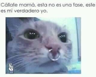 Zi mamá - meme
