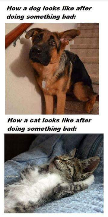 Dogs vs Cats. - meme
