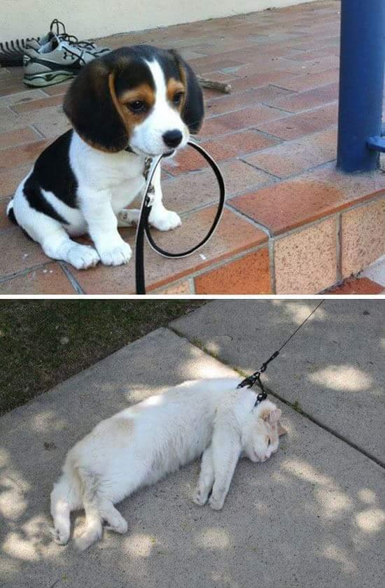 Dogs vs Cats. - meme