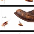Cuckroach