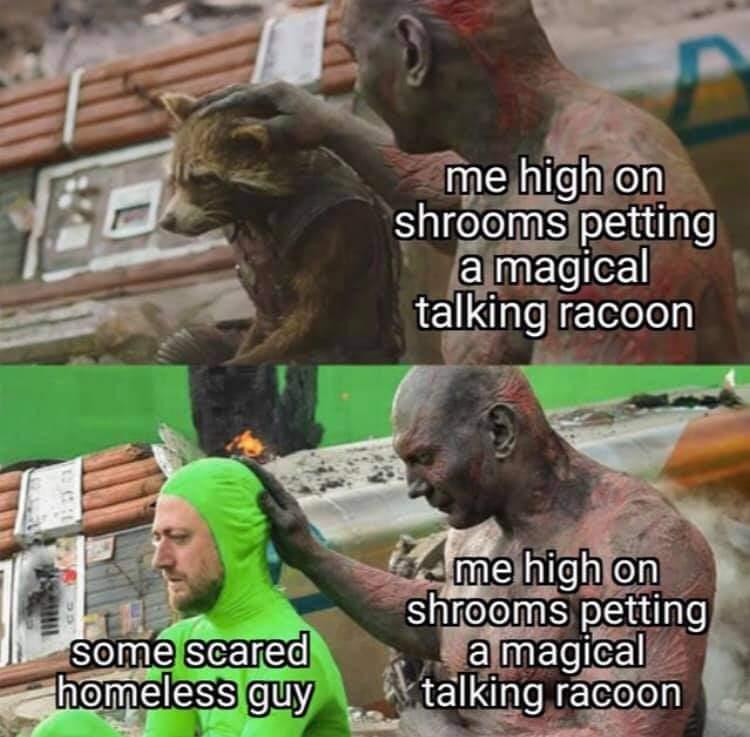 Raccoon - meme