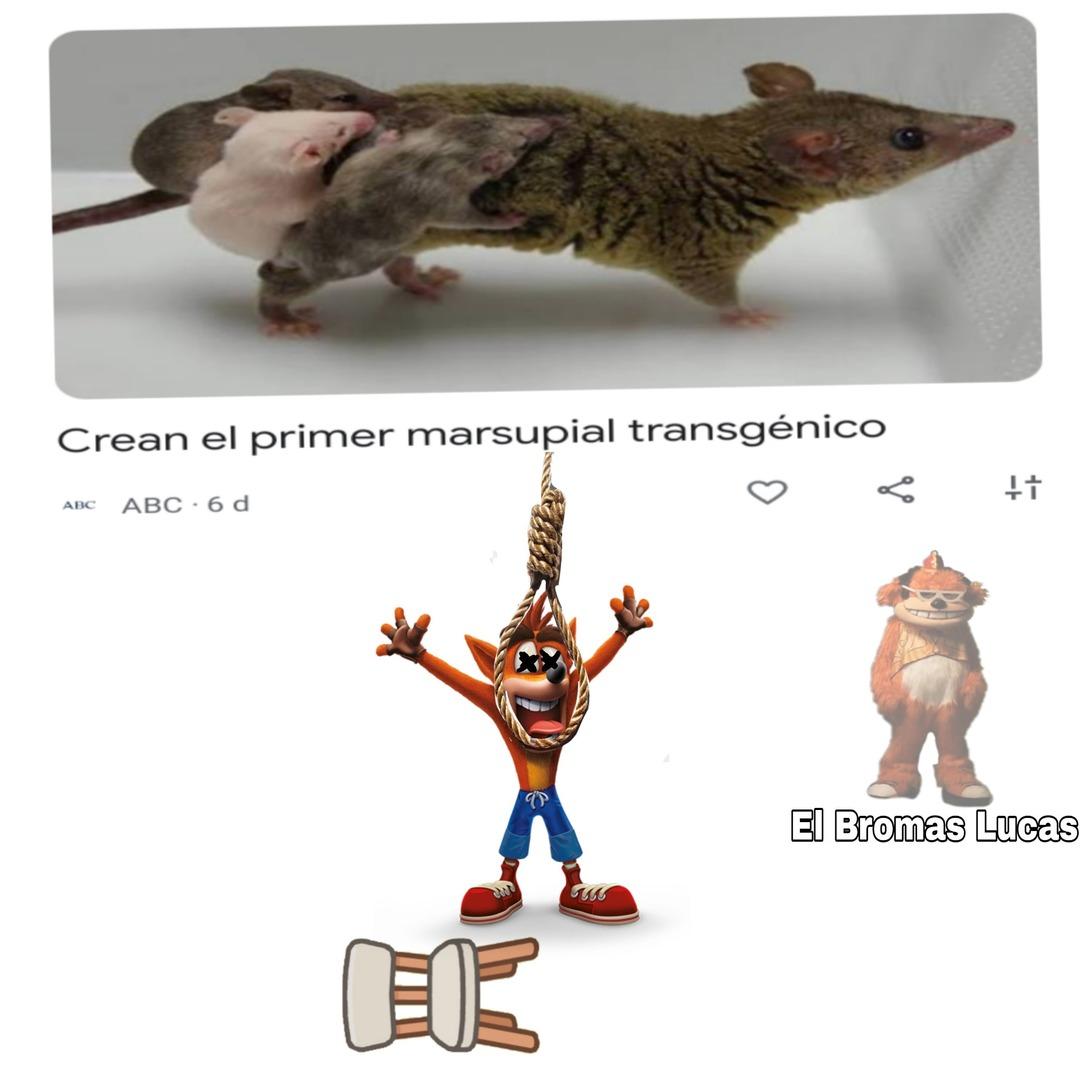 Vsshhwnksks - meme