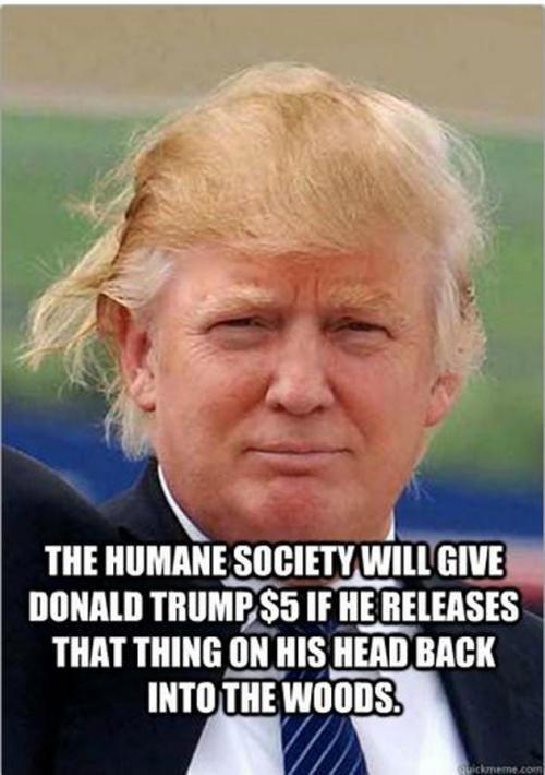 Donald Trump's Hair - meme