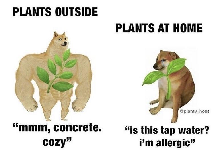 concrete cozy - meme