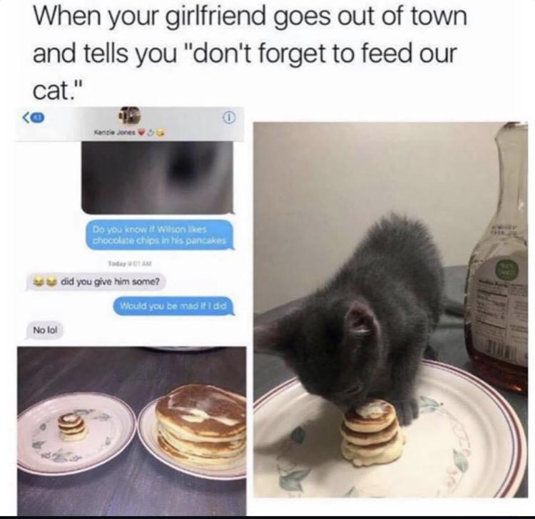 Cat Hungry? - meme