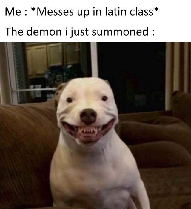 Don't mess up in latin class - meme