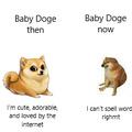 Aka puppies